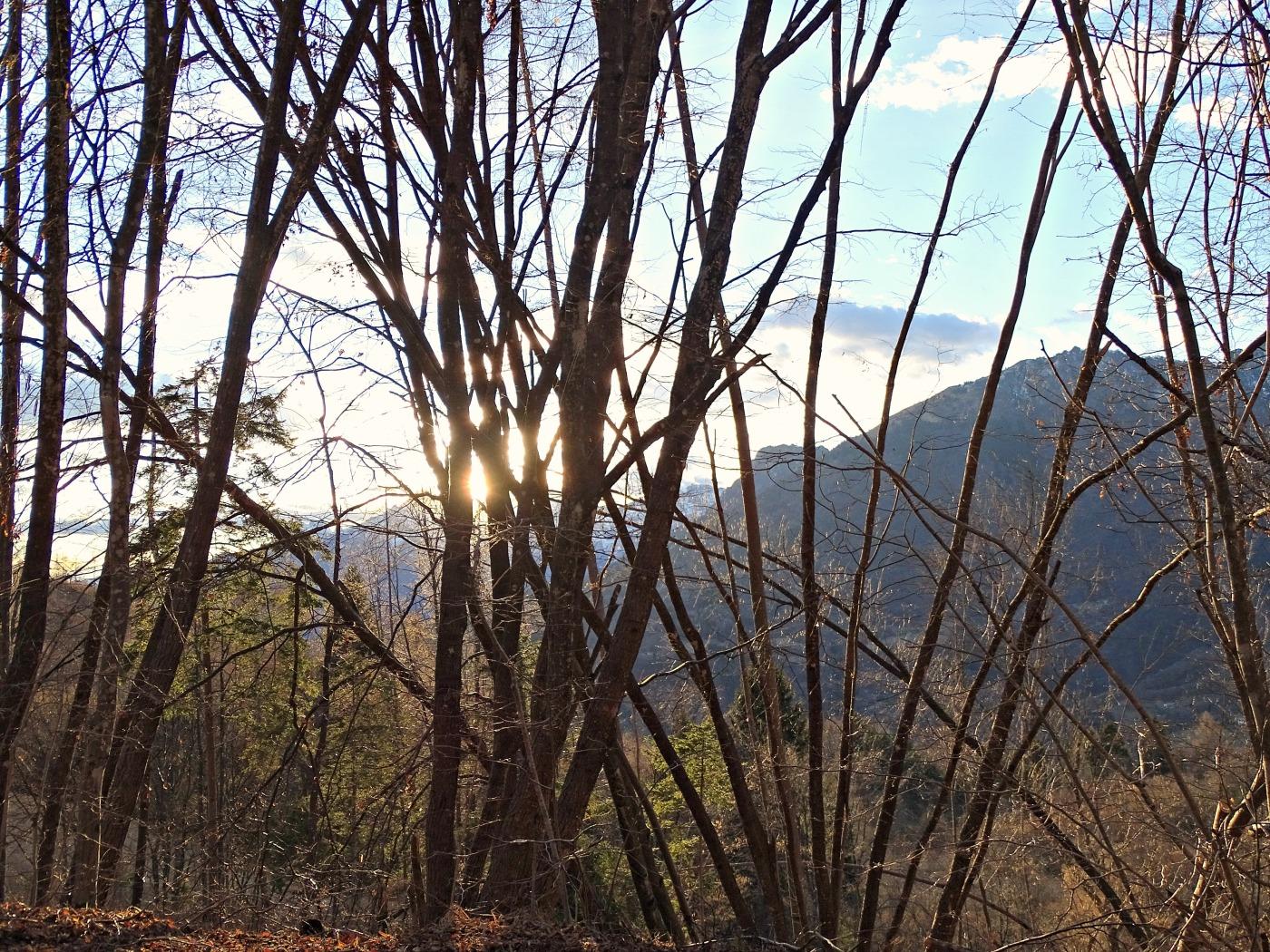 woodview.jpg