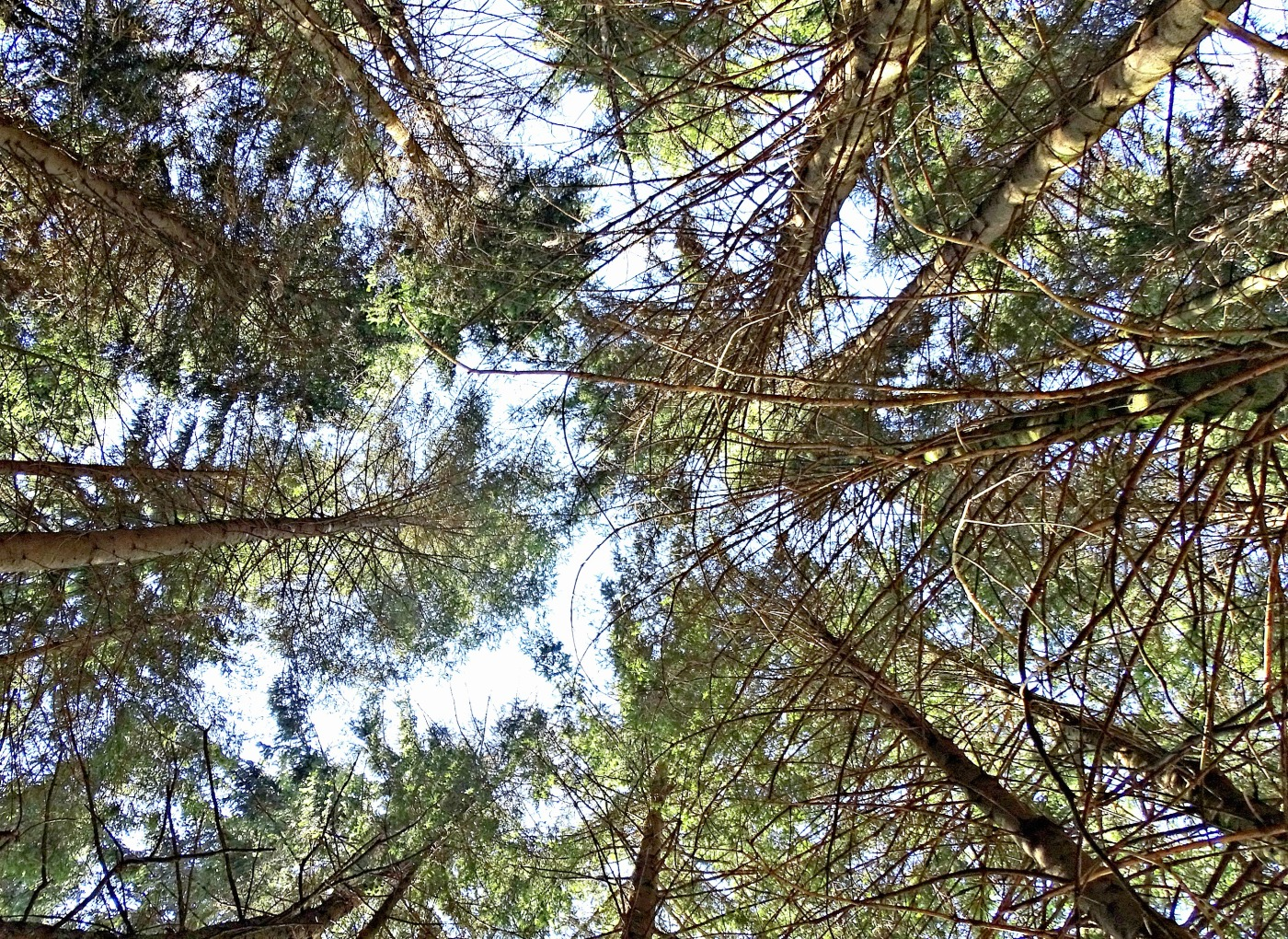 Treetop view - The truth about difficulties of living abroad & how to cope